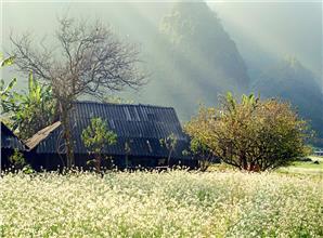 Du xuân mùa hoa trên cao nguyên Mộc Châu